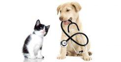 Animal Veterinary