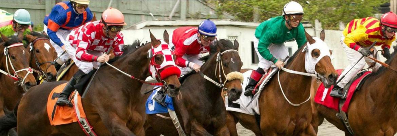 Hastings Racecourse & Slot Machines